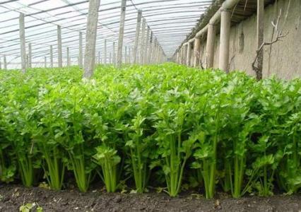山东计划到2020年建成2513万亩高标准农田