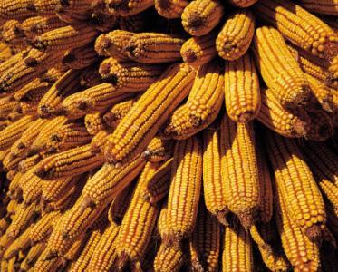 2017/18年度全球谷物贸易量将会同比减少500万吨