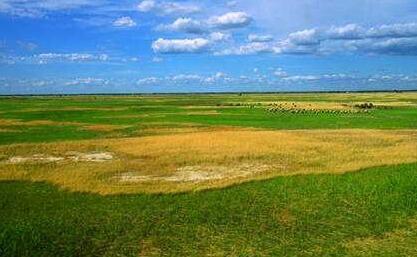 央企科尔沁草原40年挖掉一座城市 地方政府难辞其咎