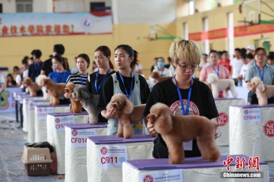 中国人口结构变化促宠物业发展:不惜为宠物花重金