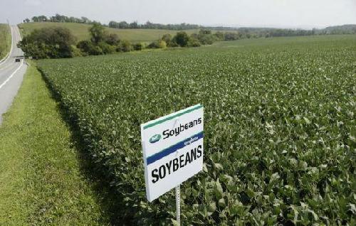 美媒:美国大豆生产商担心成中国报复的靶子