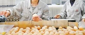 格润牧业董事长姚建征:小鸡蛋里有千亿大市场