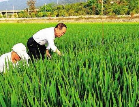 """中印尼农业科技合作""""风光无限"""""""