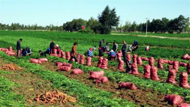 关于规范和加强国家农业综合开发项目竣工验收工作的意见