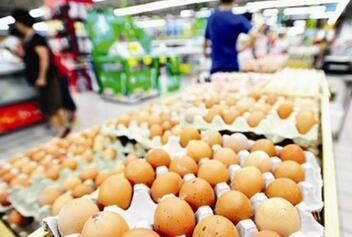 鸡蛋价格跌回10年前 有蛋鸡养殖户三天赔一万