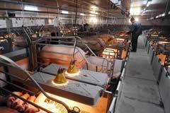 英媒称中国养猪场奔向现代化
