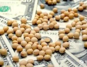 中美贸易摩擦升级波及大豆进口