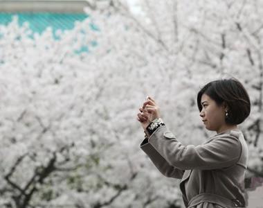 武汉大学迎赏樱高峰 游客扎堆校园内