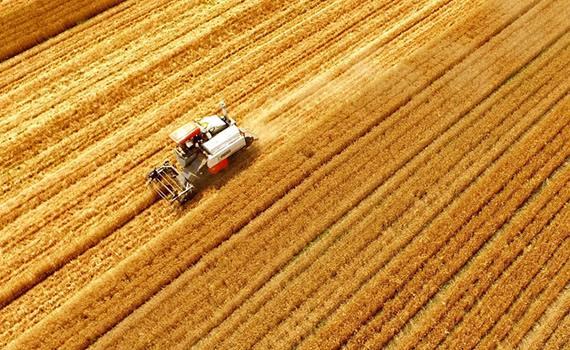 今年夏粮再获丰收 产量再创历史新高