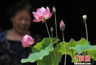 """中国首届""""大隐微莲""""展亮相南京"""