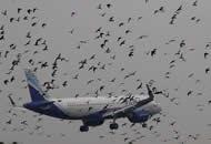 印度飞机降落遇上鸽群起飞被层层包围