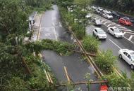 台风后深圳首个上班日:市民跨树穿行