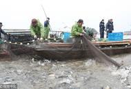一网10万多斤鱼!浙江渔民新年冬捕大丰收